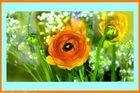 Lichtdurchflutete Frühjahrsboten*