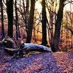 ..lichte Bäume