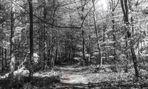 Lichte Waldwege