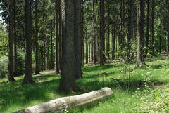 Lichter Wald in Maigrün