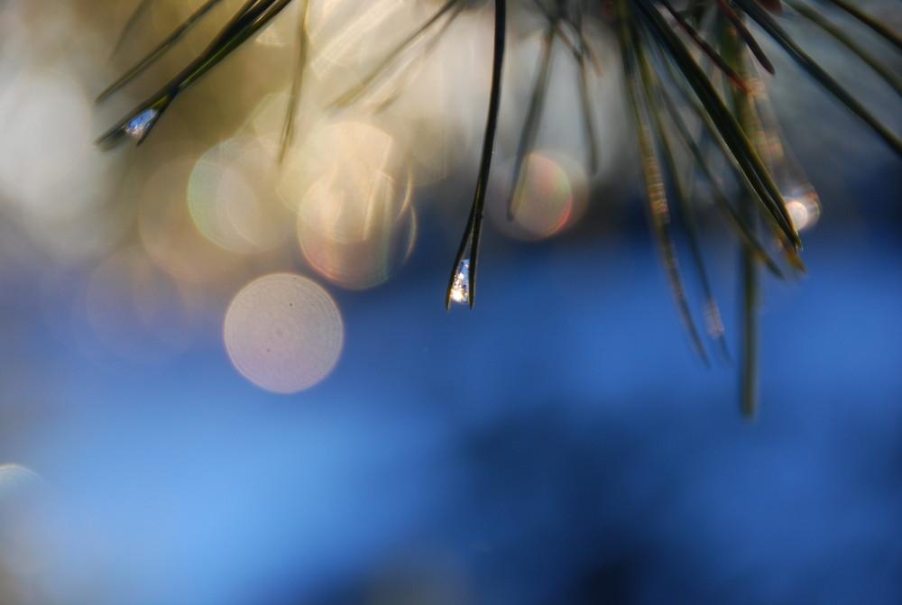 Lichterglanz der Winterzeit (1)