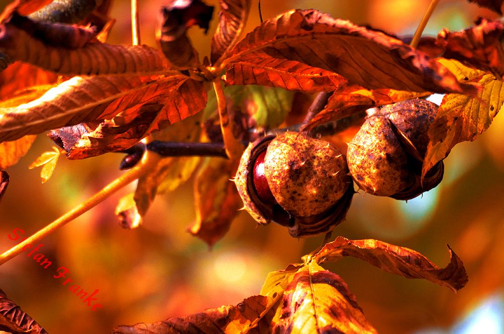 Lichterspiel der Herbstfarben