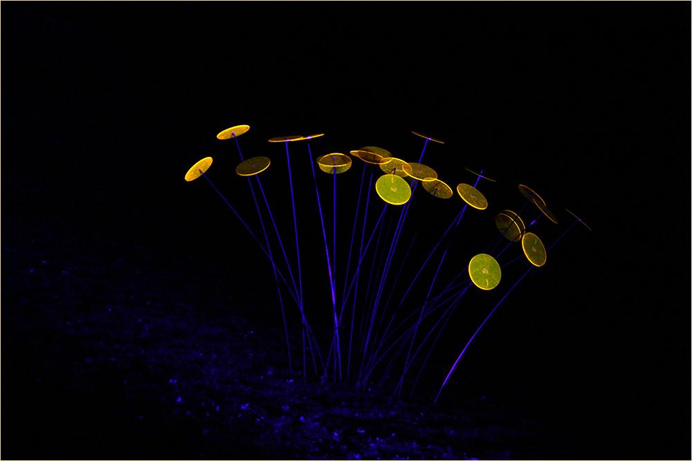 Lichtfänger