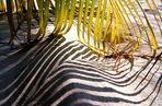 Lichtillusion, ein Zebra im Sand