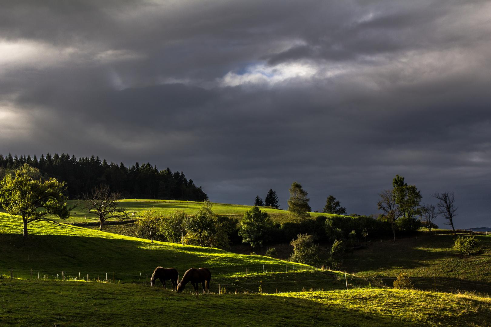 Licht&Schatten auf der Pferdekoppel