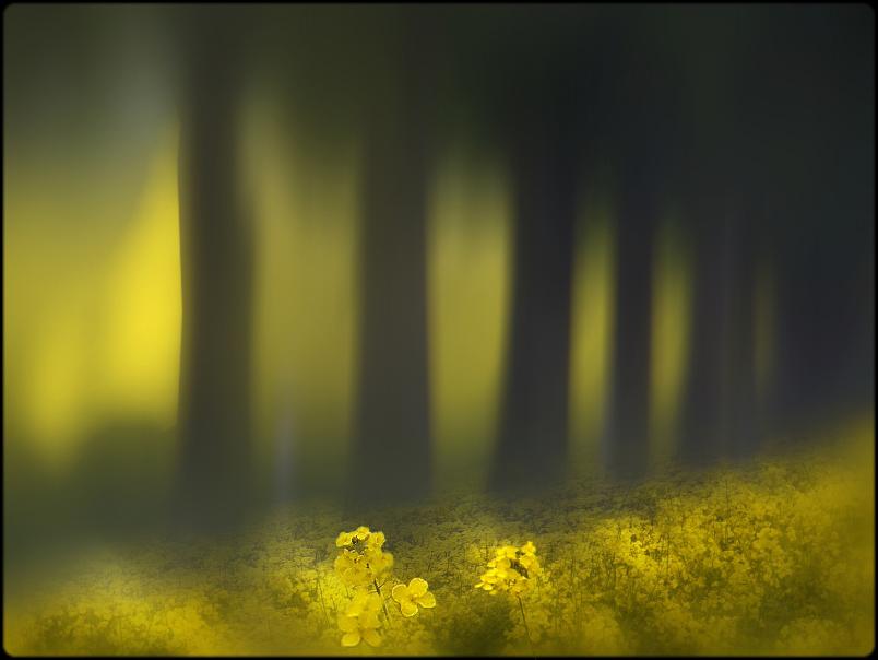 lichtspiele....