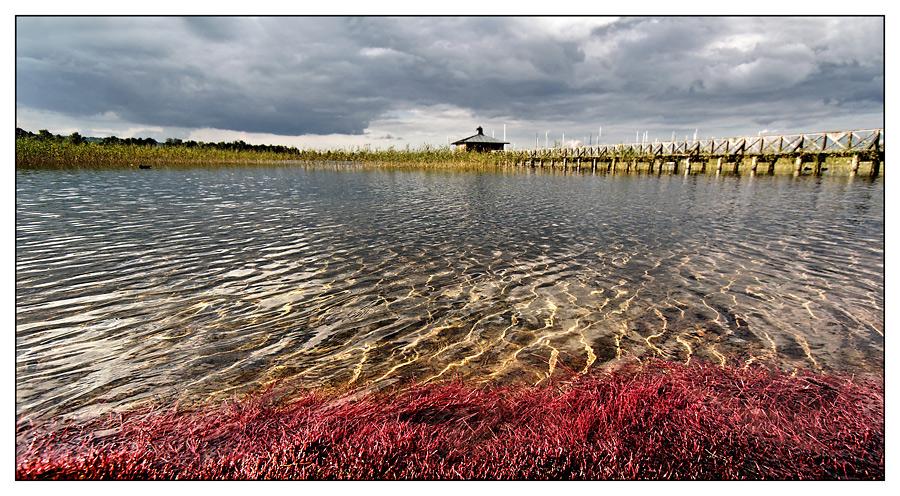 lichtspiele und rote algen foto bild landschaft bach fluss see see teich t mpel. Black Bedroom Furniture Sets. Home Design Ideas