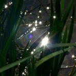 Lichtspielereien ... © Simon Wieland