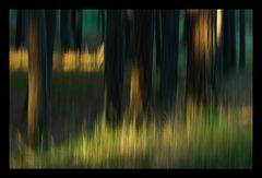 Lichtspot im Föhrenwald