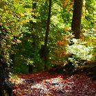 Lichtstimmung im Herbst