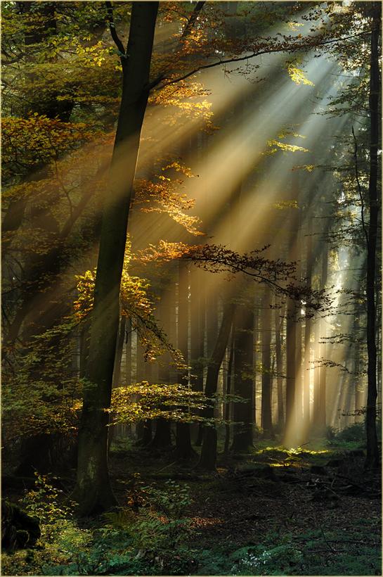 Lichtstrahlen im Eifelwald