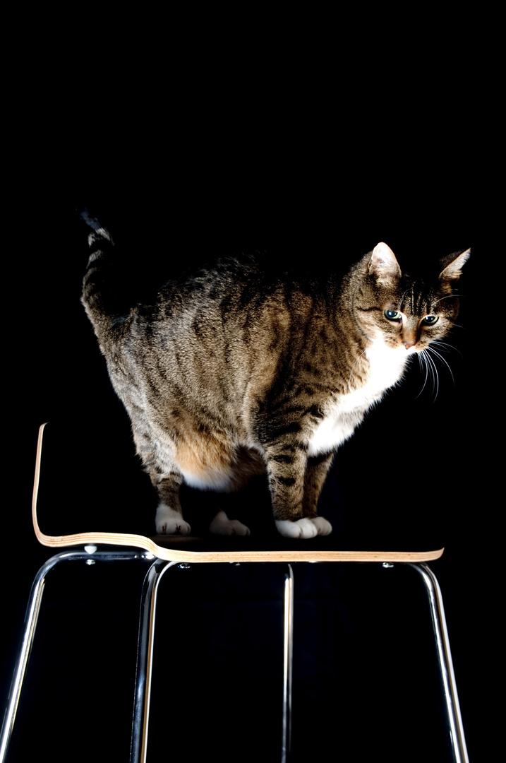 Lichttest mit Katze