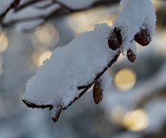 Lichtvoller Wintereinbruch! - Irruption lumineuse de l'hiver!