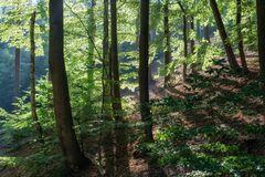 Lichtwald