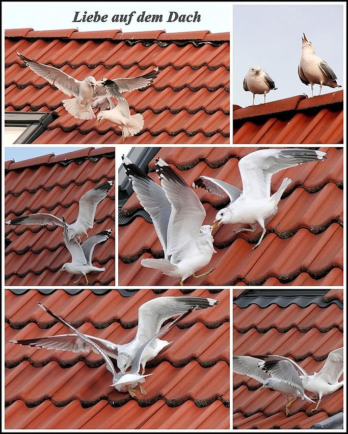 Liebe auf dem Dach
