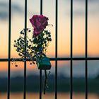 Liebe - aufgehängt.....