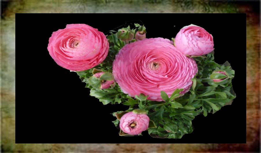 Liebe Gisela dein letztes Freitagsblümchen