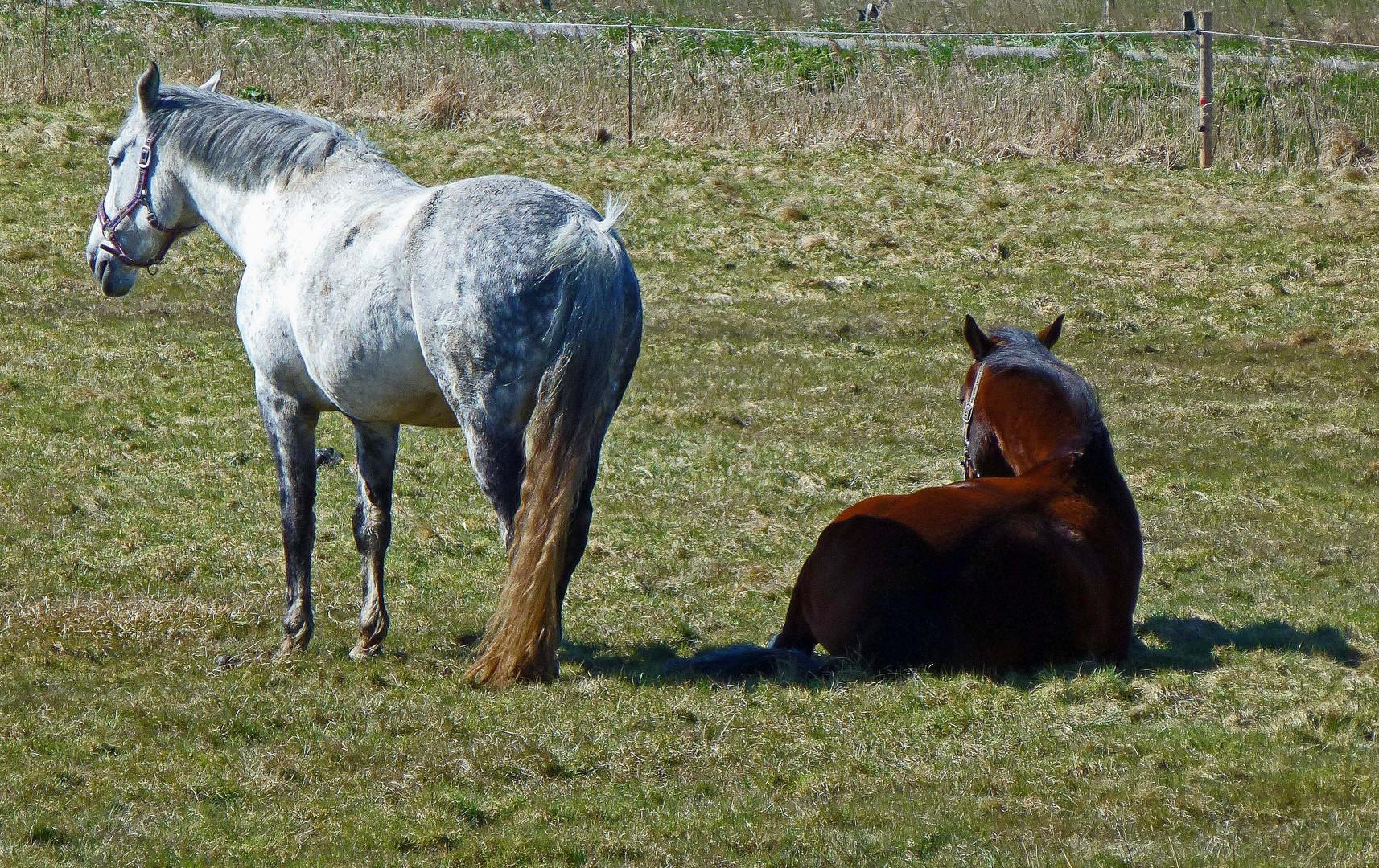 liebe Grüne, was sind schon Ponys.....