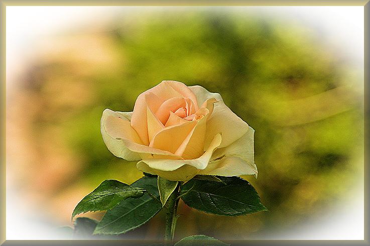 liebe Grüße an alle......... Foto & Bild | pflanzen, pilze ...