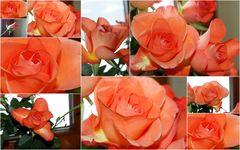 Liebe Grüsse zum Valentin