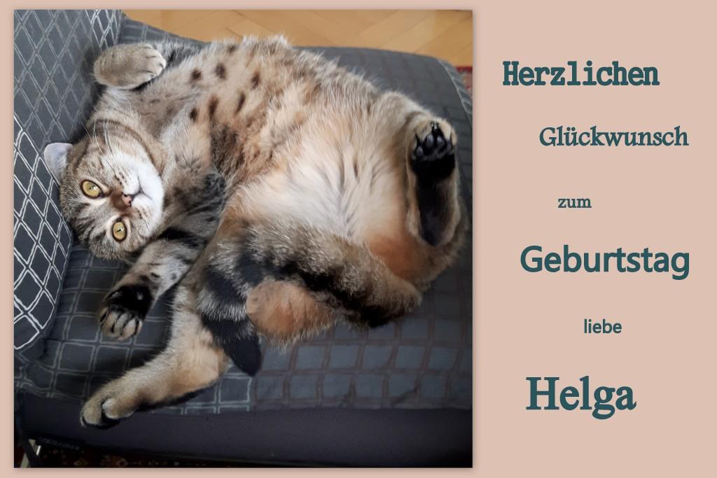 Liebe Helga Foto Bild Tiere Haustiere Katzen Bilder Auf