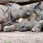 Liebe im Nürnberger Zoo