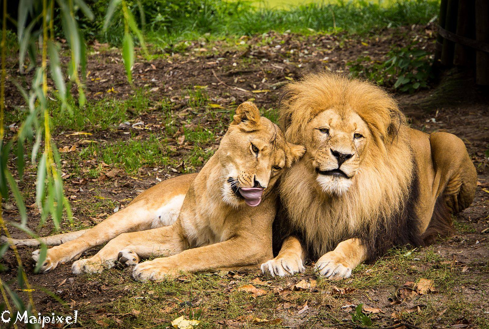 Liebe im Zoo