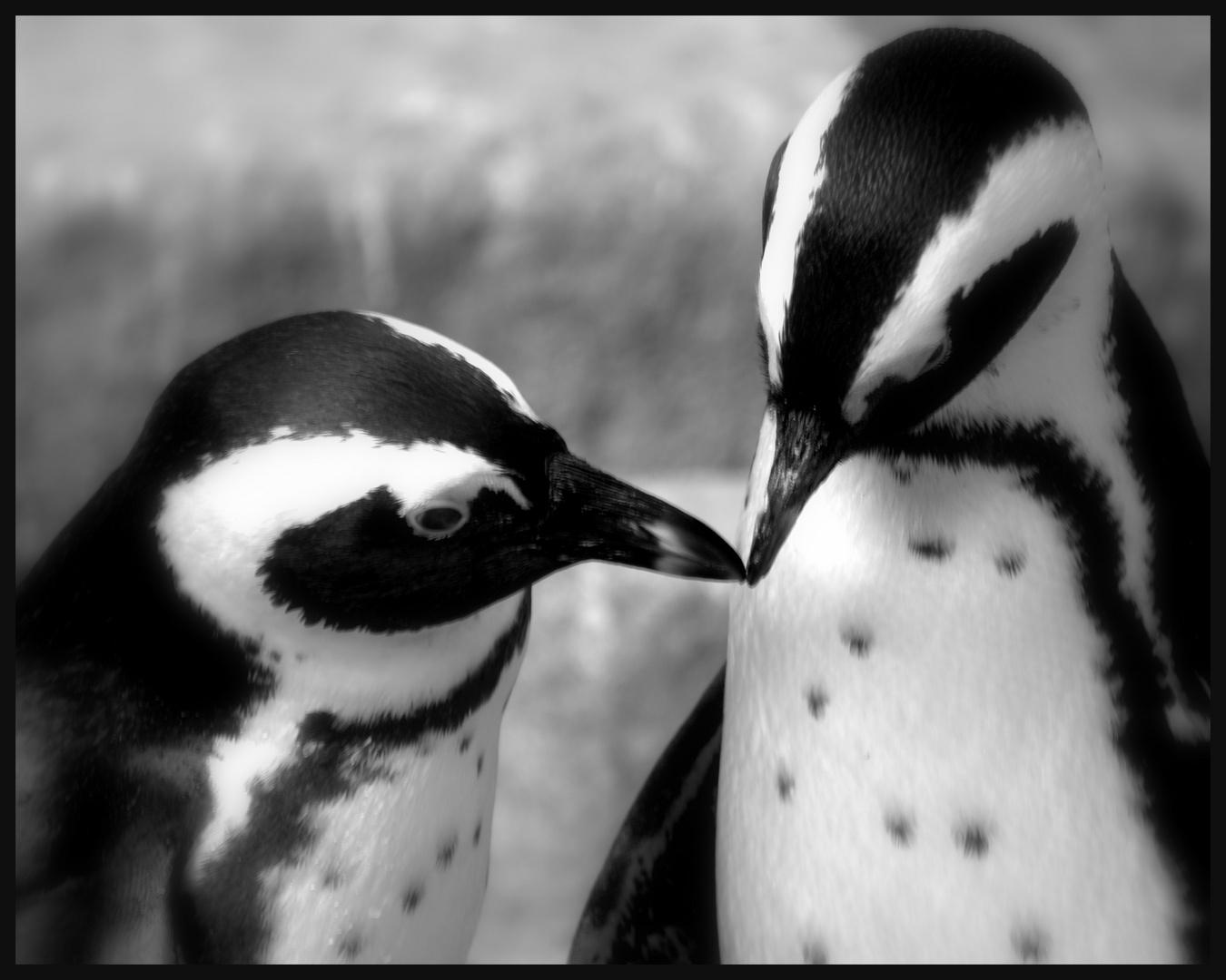 *Liebe in schwarz/weiß*