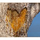 Liebe ist....