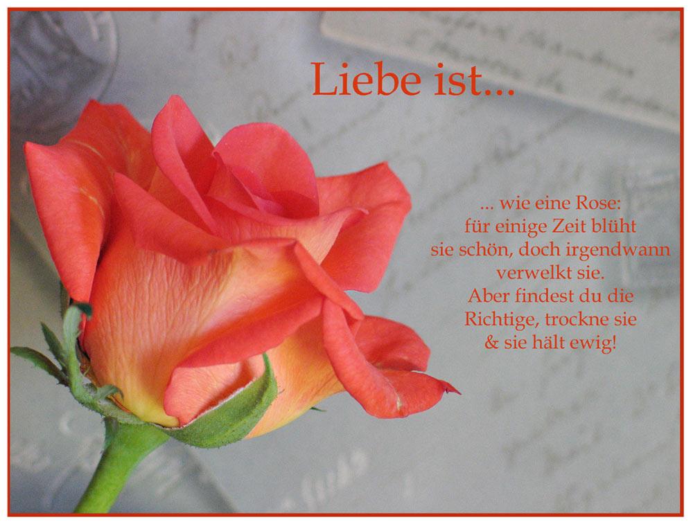 Liebe ist wie eine Rose Foto & Bild | karten und