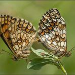 Liebe unter Schmetterlingen