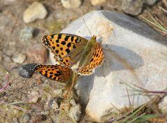 Liebe unter Schmetterlingen...