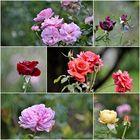 Liebe Wochenendgrüße aus dem Vorgarten