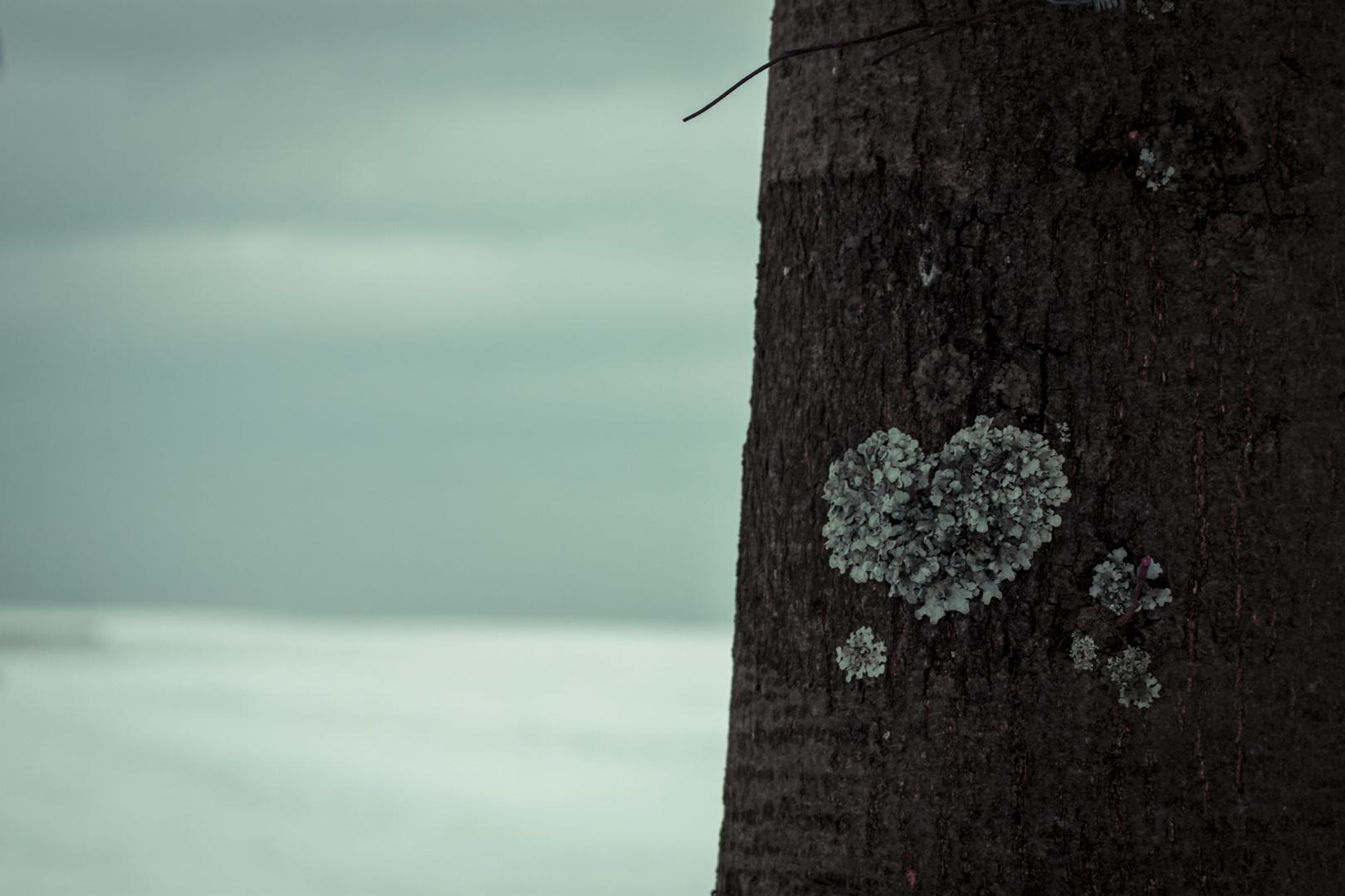 Liebe zur Natur