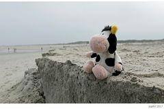 Lieber die Kuh am Strand...