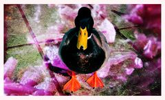 Lieber eine Ente mit Blaukraut als Schrecken ohne Ende!