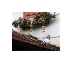 lieber eine Taube auf dem Dach