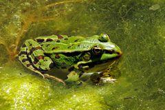 Lieber einen Frosch im Teich als einen Frosch im Hals :-)