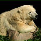 Lieber Gott lass doch bitte Knut bald zum mir kommen nach ZOOM