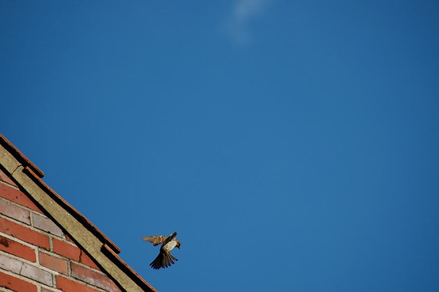 Lieber keinen Spatz auf dem Dach