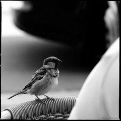 Lieber nen Spatz in der Hand als die Taube aufm Dach