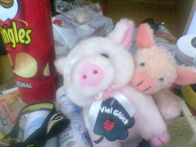 Liebes Schwein! Lass dich von deinem Verstand umarmen!