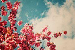 Lieblings-bäume.