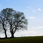 > Lieblingsbank unter Bäumen <