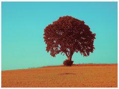 Lieblingsbaum - mal anders