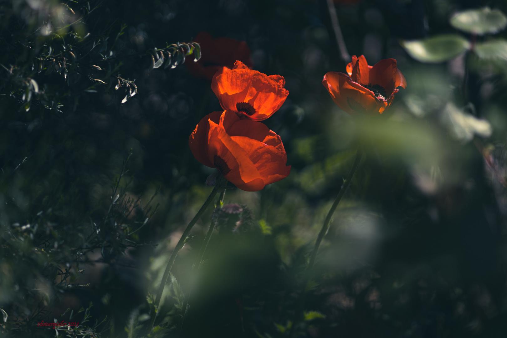 Lieblingsblümchen #2