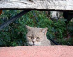Lienchen beobachtet.....