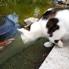 Liesel beim Goldfischgucken