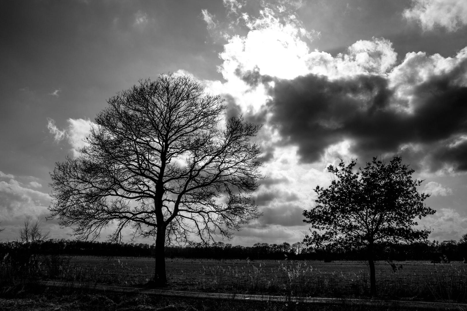 Liether Moor