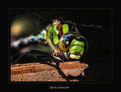 life in technicolor (2)